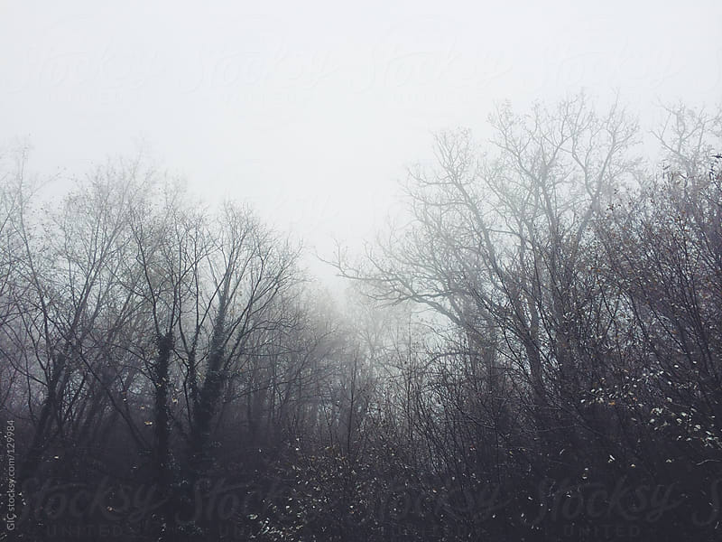 Forest in the fog by GIC for Stocksy United