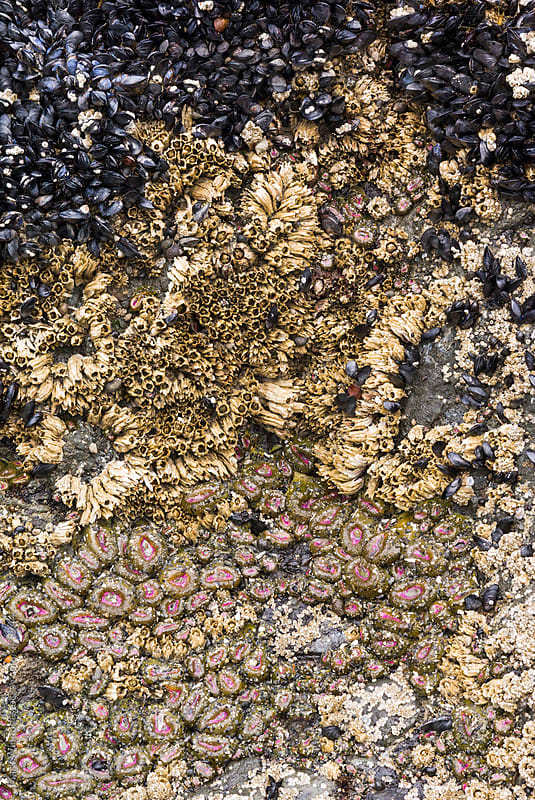 A collection of marine life, closeup by Mark Windom for Stocksy United