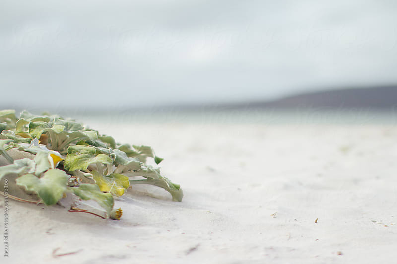 Low view of Beach sand and Beach flora by Jacqui Miller for Stocksy United