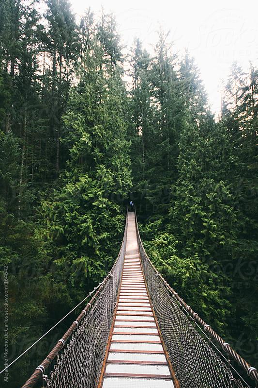 Suspension bridge on forest, Vancouver, Canada by Alejandro Moreno de Carlos for Stocksy United