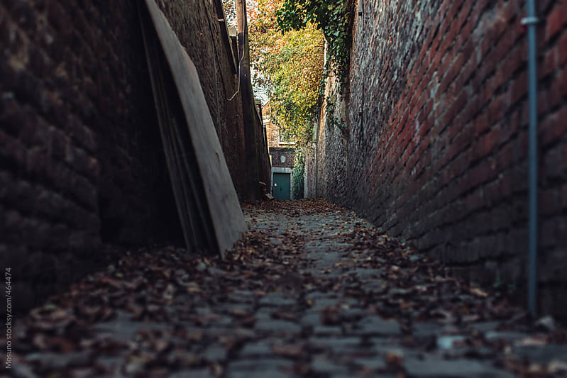Small Town Street in the Fall by Mosuno for Stocksy United