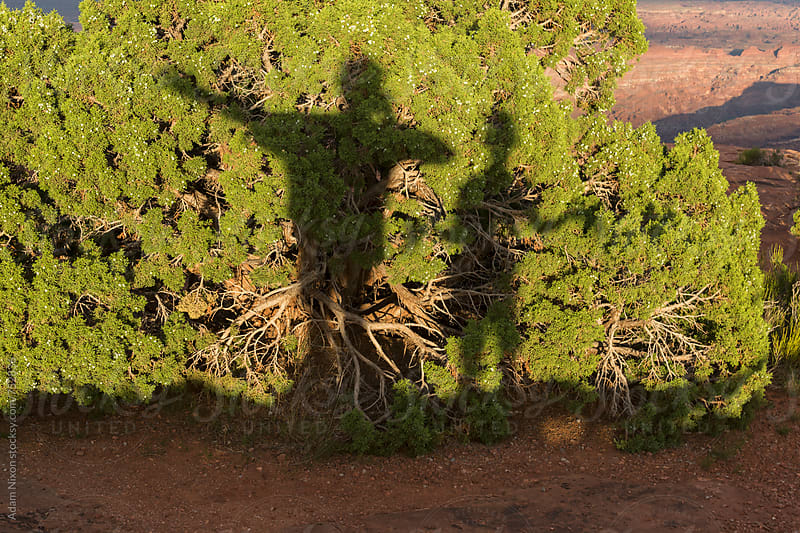 Two peoples shadow on a bush by Adam Nixon for Stocksy United