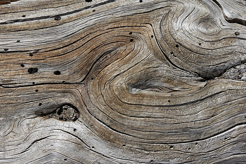 Close up of wood texture from fallen tree by Monica Murphy for Stocksy United