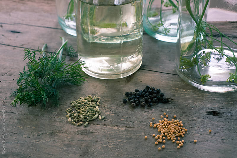 Homemade Dill Pickles Ingredients by Rowena Naylor for Stocksy United