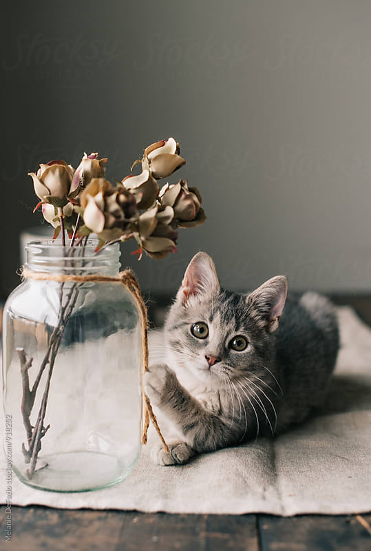 Kitten by Melanie DeFazio for Stocksy United