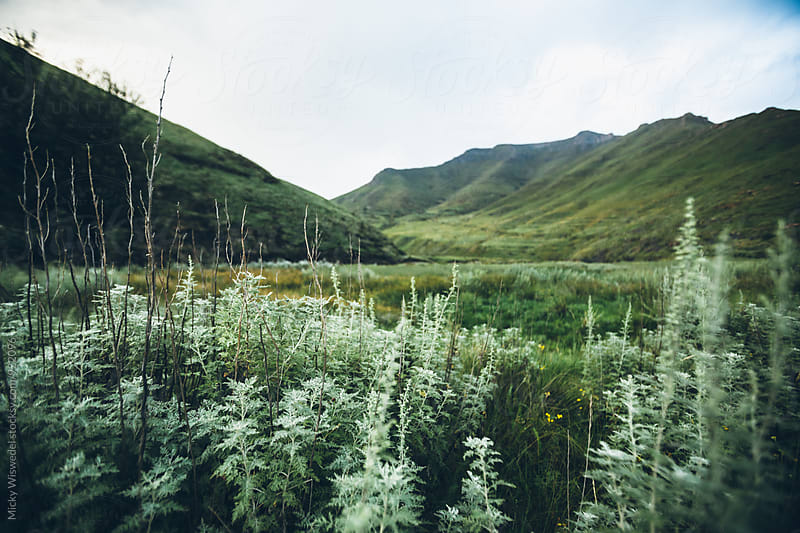 lush green mountain wilderness landscape by Micky Wiswedel for Stocksy United