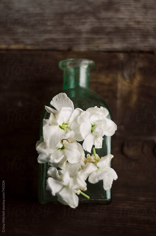 white flowers and bottle by Crissy Mitchell for Stocksy United