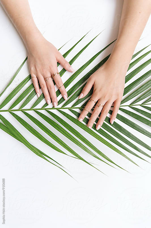 Hands on a palm leaf by Sophia Hsin for Stocksy United