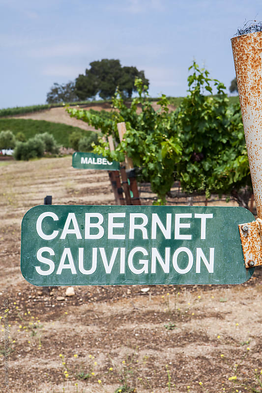 Cabernet Sauvignon Sign by Jayme Burrows for Stocksy United
