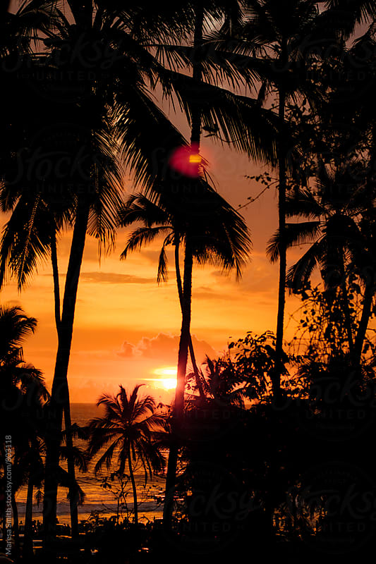 Silhouetted palm trees against the Kerala sunset by Maresa Smith for Stocksy United