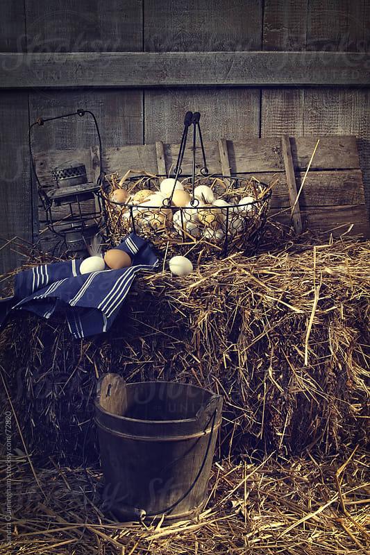 Eggs in wire basket on hay in barn by Sandra Cunningham for Stocksy United
