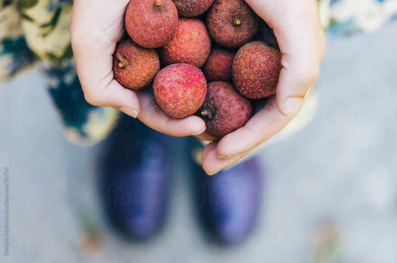A girl's hands holding lychee fruit by Deirdre Malfatto for Stocksy United