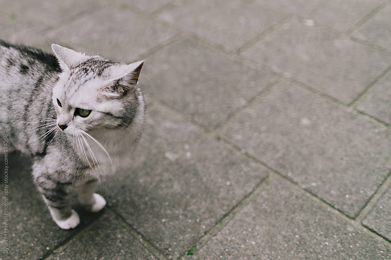 Grey Kitty by Dylan M Howell Photography for Stocksy United