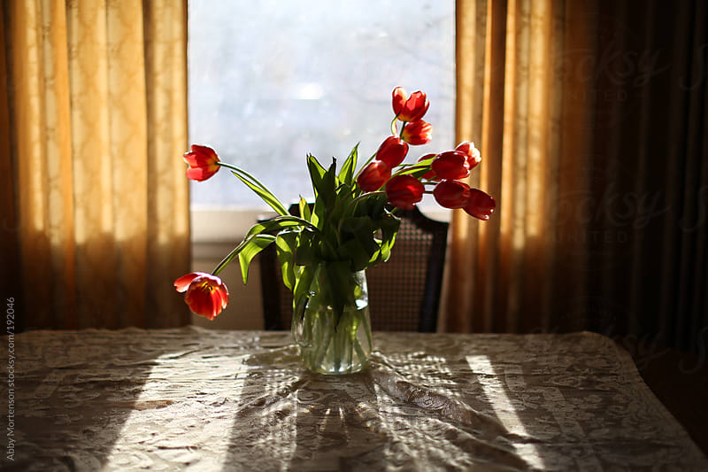 Red Tulips on Table in Home by Abby Mortenson for Stocksy United