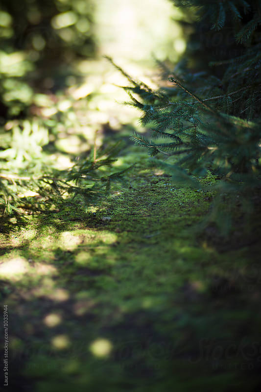 Moss on woods path amongst pine trees branches by Laura Stolfi for Stocksy United