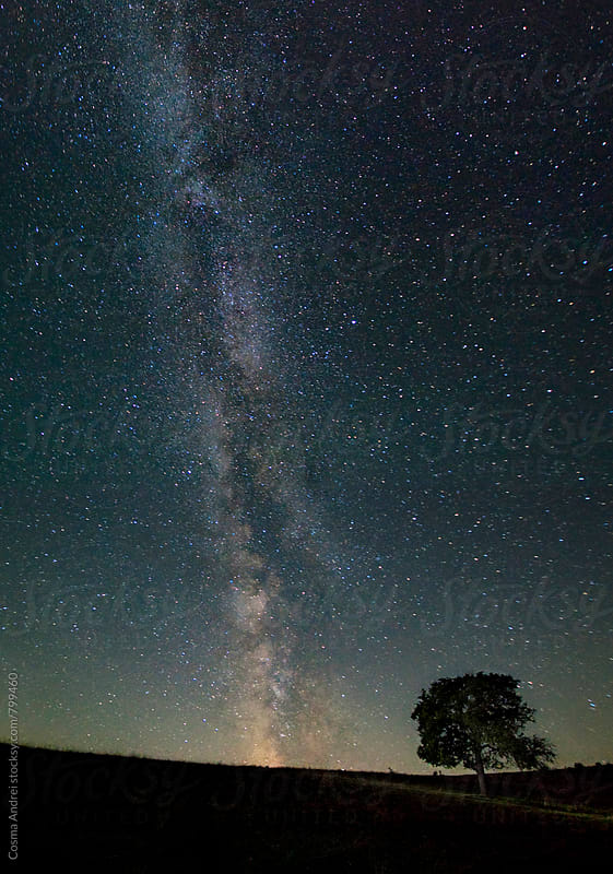 Tree under milky way stars at night by Cosma Andrei for Stocksy United