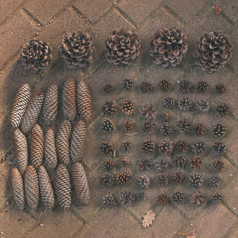Composition of different types of pine cones in order on a brick background. by BONNINSTUDIO for Stocksy United