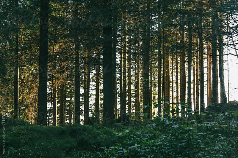 Through the trees by Agencia for Stocksy United