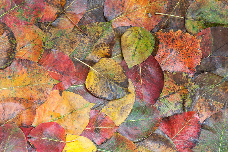 Leaves in Autumn by Marilar Irastorza for Stocksy United