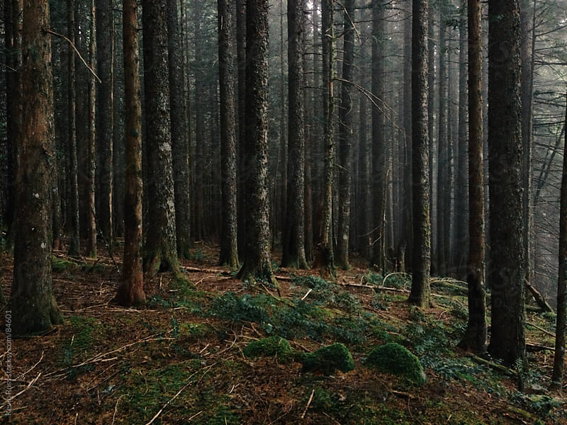 Dark Oregon Forest by Kevin Russ for Stocksy United