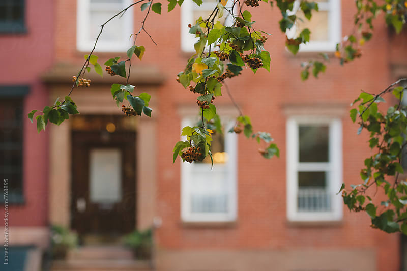 Tree in front of brownstone by Lauren Naefe for Stocksy United