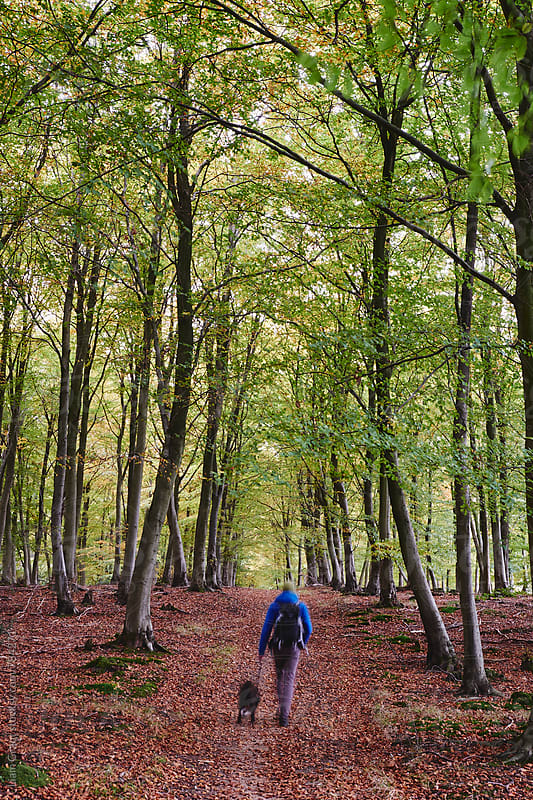 Male walking his dog through autumnal woodland. Norfolk, UK. by Liam Grant for Stocksy United