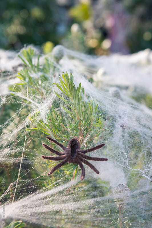 halloween decorating ideas for the garden, giant spider and web, by Gillian Vann for Stocksy United