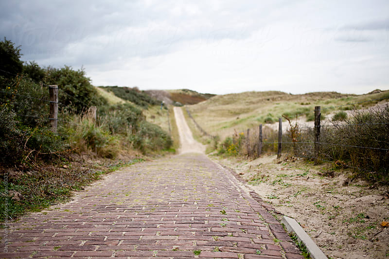 Pathway through the dunes by Denni Van Huis for Stocksy United