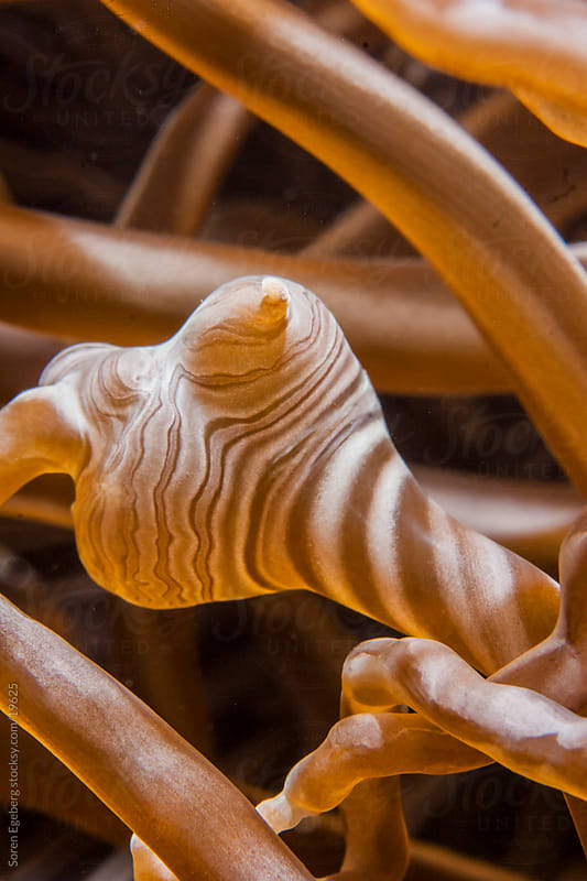 Brown Soft coral closeup on the reef underwater in Indonesia by Soren Egeberg for Stocksy United