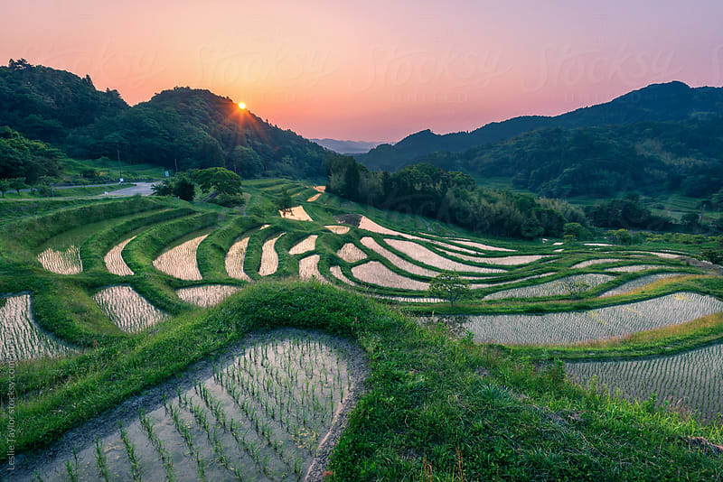 Terraced Rice Field Sunrise by Leslie Taylor for Stocksy United