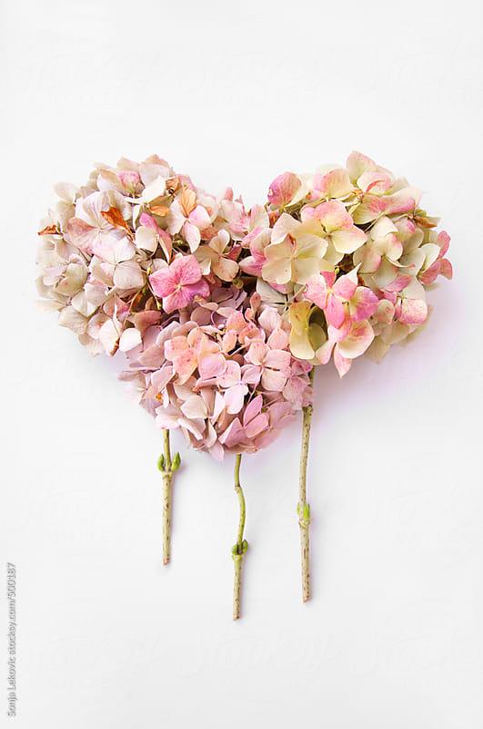 flower heart on white background by Sonja Lekovic for Stocksy United