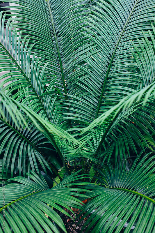 Tropical ferns growing in rainforest  by Paul Edmondson for Stocksy United