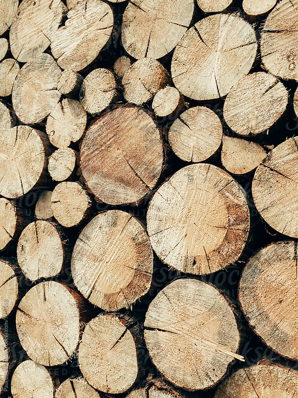 Stack of cut logs by Paul Edmondson for Stocksy United
