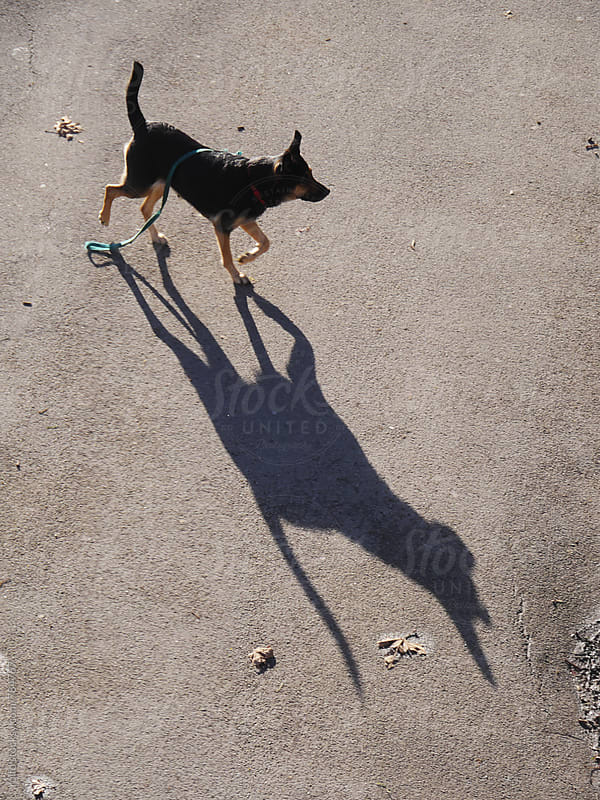 dog shadow by rolfo for Stocksy United