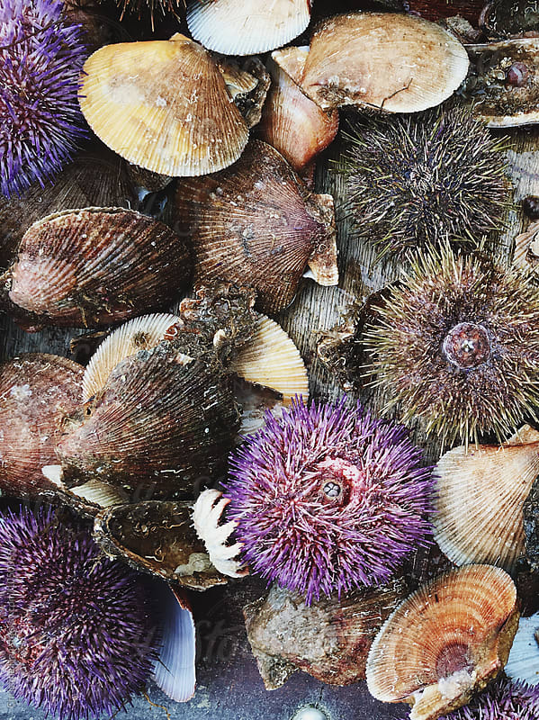 Scallops and Sea Urchins by Christine Han for Stocksy United
