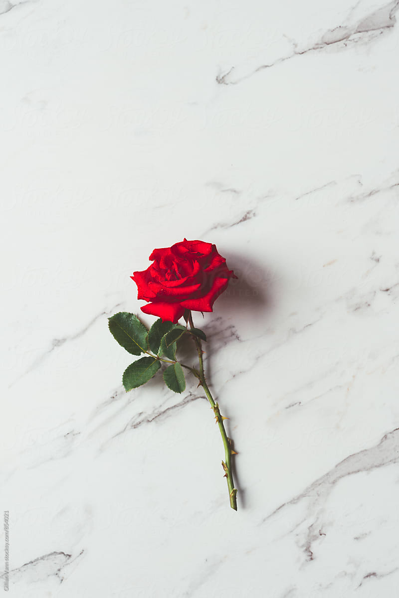 Red Rose On A Marble Background By Gillian Vann Rose