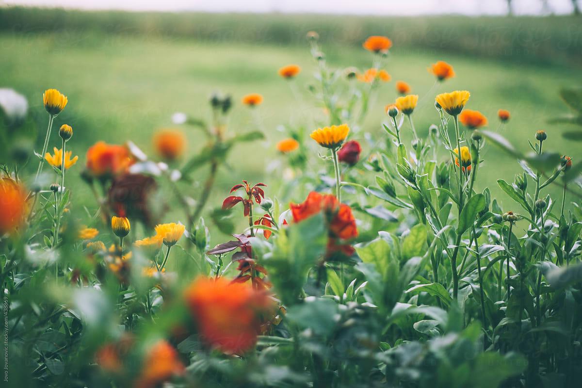 Field Of Wildflowers By Jovo Jovanovic Adventure Stocksy United
