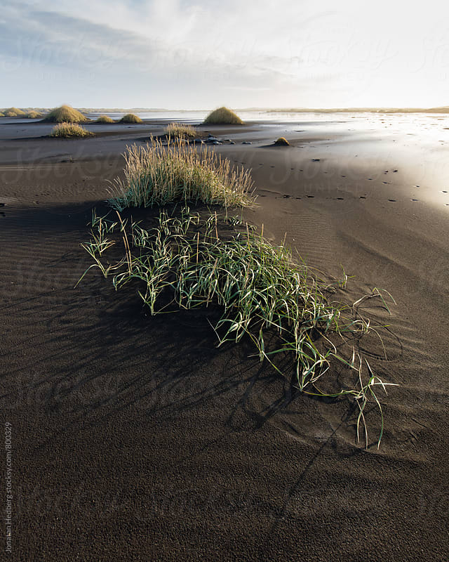 Patterns in the sand by Jonatan Hedberg for Stocksy United