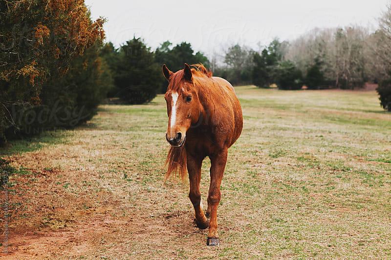 Horse on a field by Ellie Baygulov for Stocksy United
