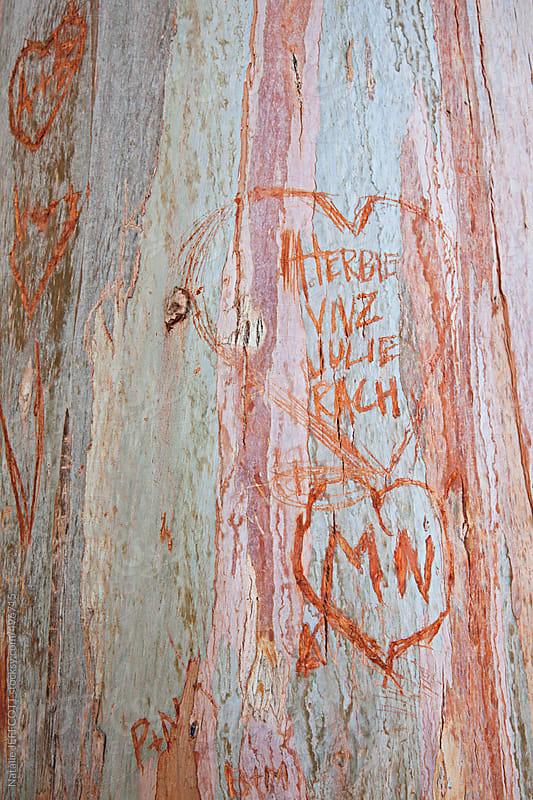 love heart and initials carved into a gum tree by Natalie JEFFCOTT for Stocksy United