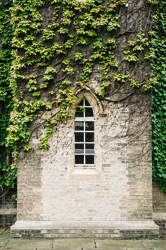 Small window with ivy surrounding it by Sam Burton for Stocksy United