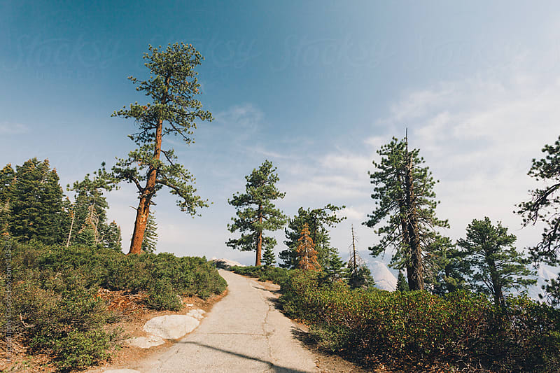 Pathway and trees, Yosemite by Image Supply Co for Stocksy United