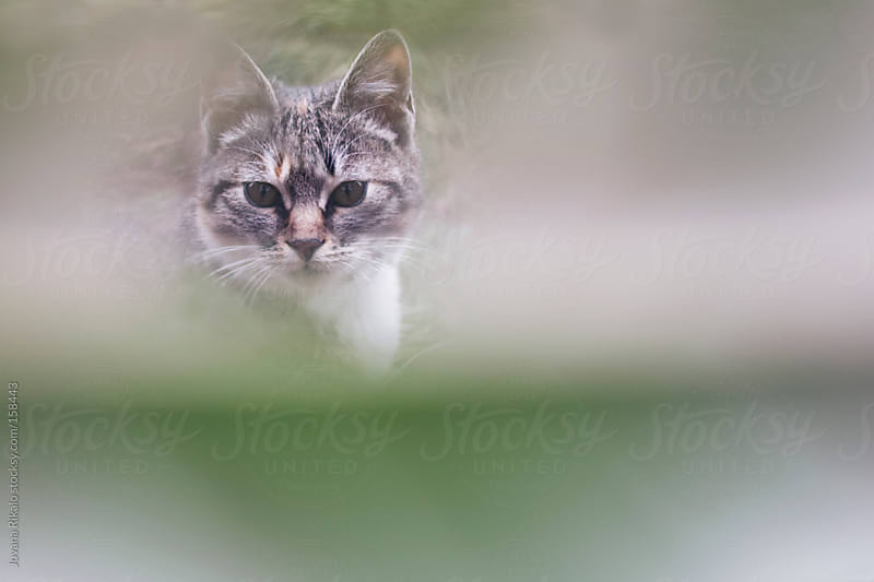 Cute little cat looking trough leaf by Jovana Rikalo for Stocksy United