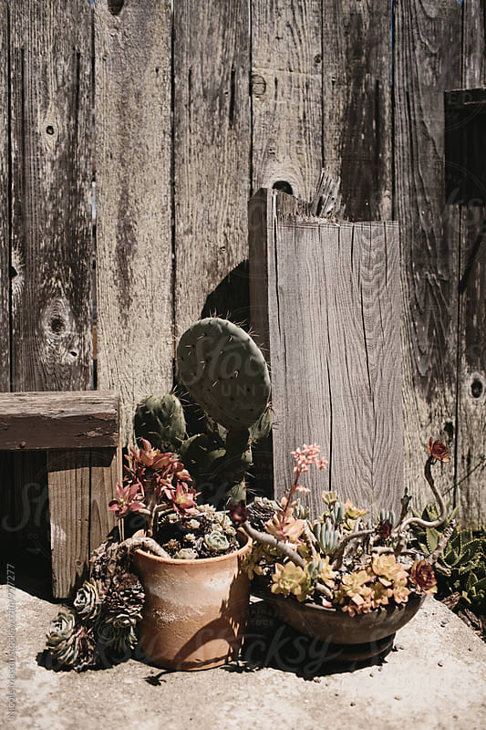 plants outside of a wooden fence by Nicole Mason for Stocksy United