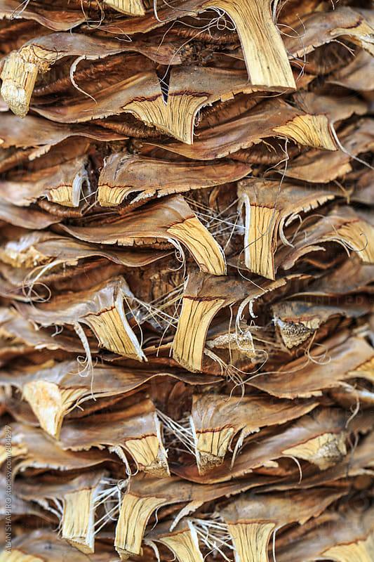 curly tree bark by alan shapiro for Stocksy United