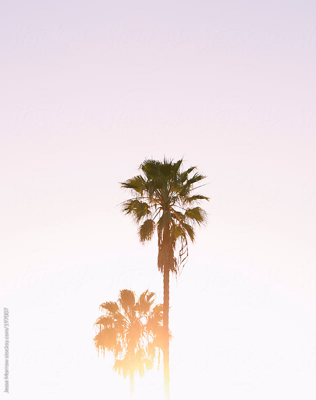 palm by Jesse Morrow for Stocksy United