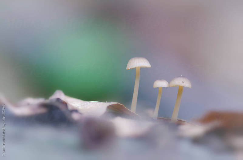 Mushrooms on the forest soil with dry leaves by Cosma Andrei for Stocksy United