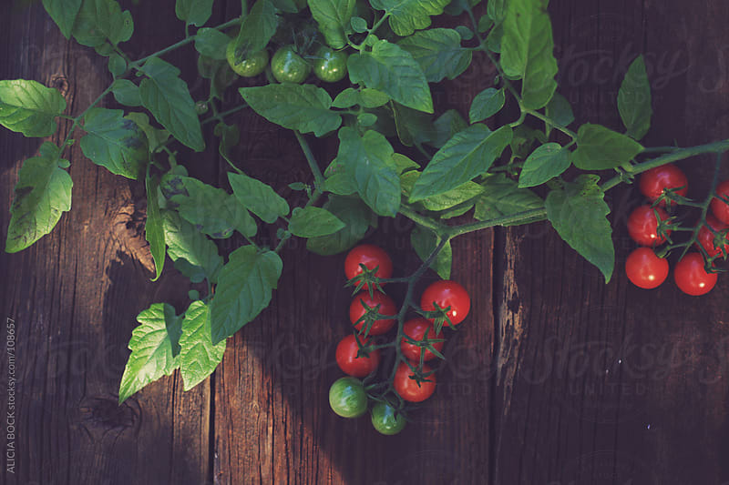 Cherry Tomatoes On The Vine by ALICIA BOCK for Stocksy United
