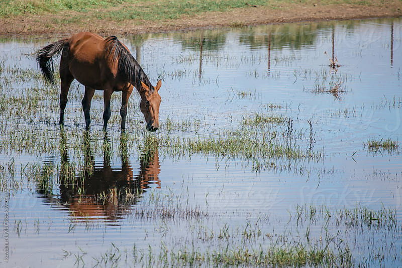 Horses in Field by Rowena Naylor for Stocksy United