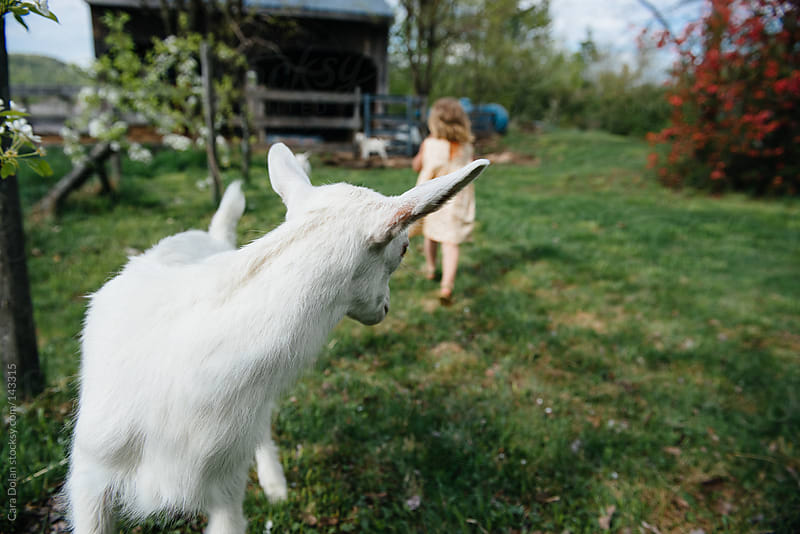 Young goat watches little farm girl run away by Cara Dolan for Stocksy United